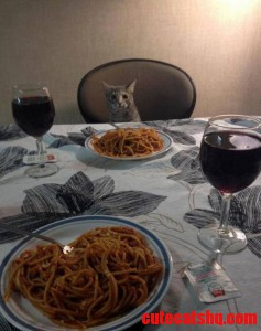 A Nice Dinner Together