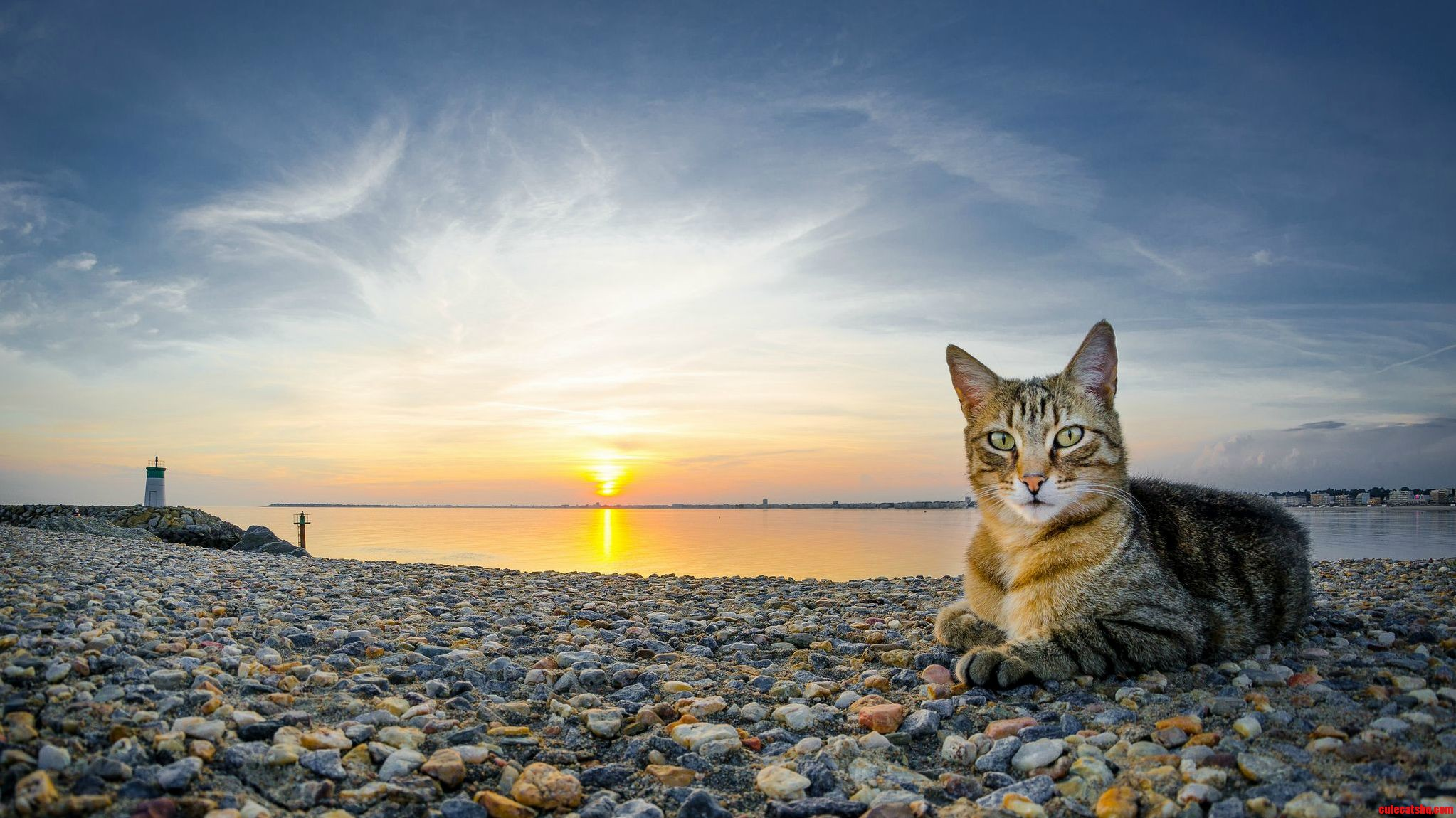 A Purrfect Sunset.