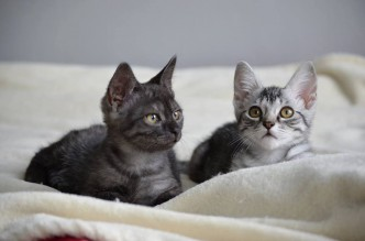 After A Rough Start These Rescue Kittens Are Ready To Find A Home
