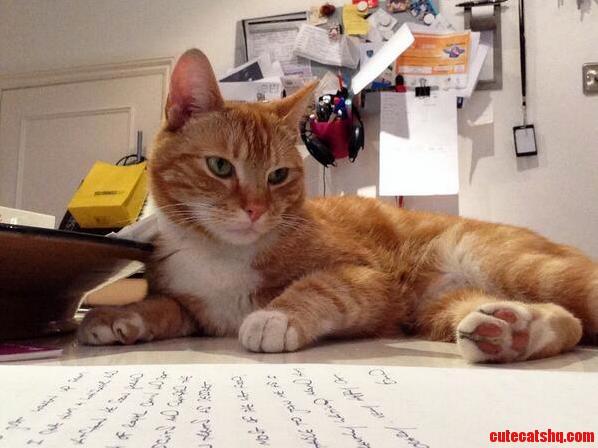 Arlo The Editor..