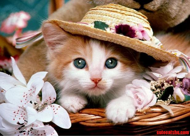 Aww Beautiful Cat With A Hat
