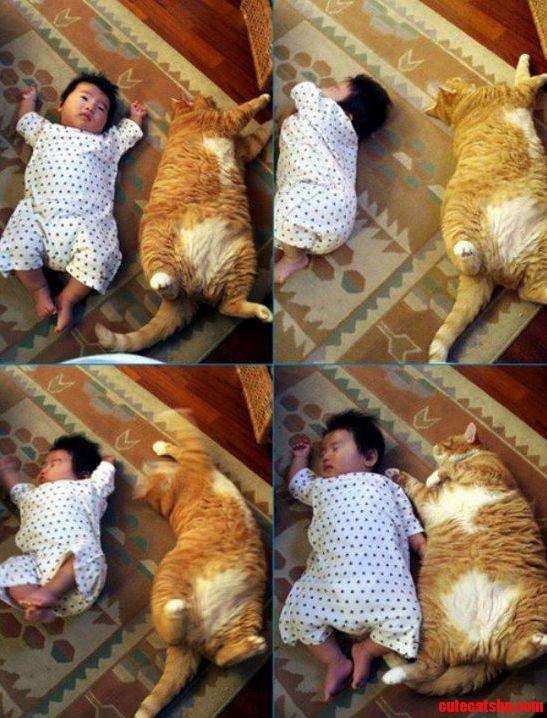 Cat Baby Sleeping Both Look Similar