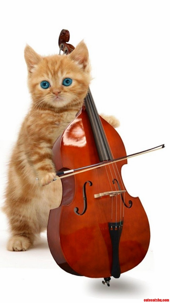 Cat Music On The Musical Instruments