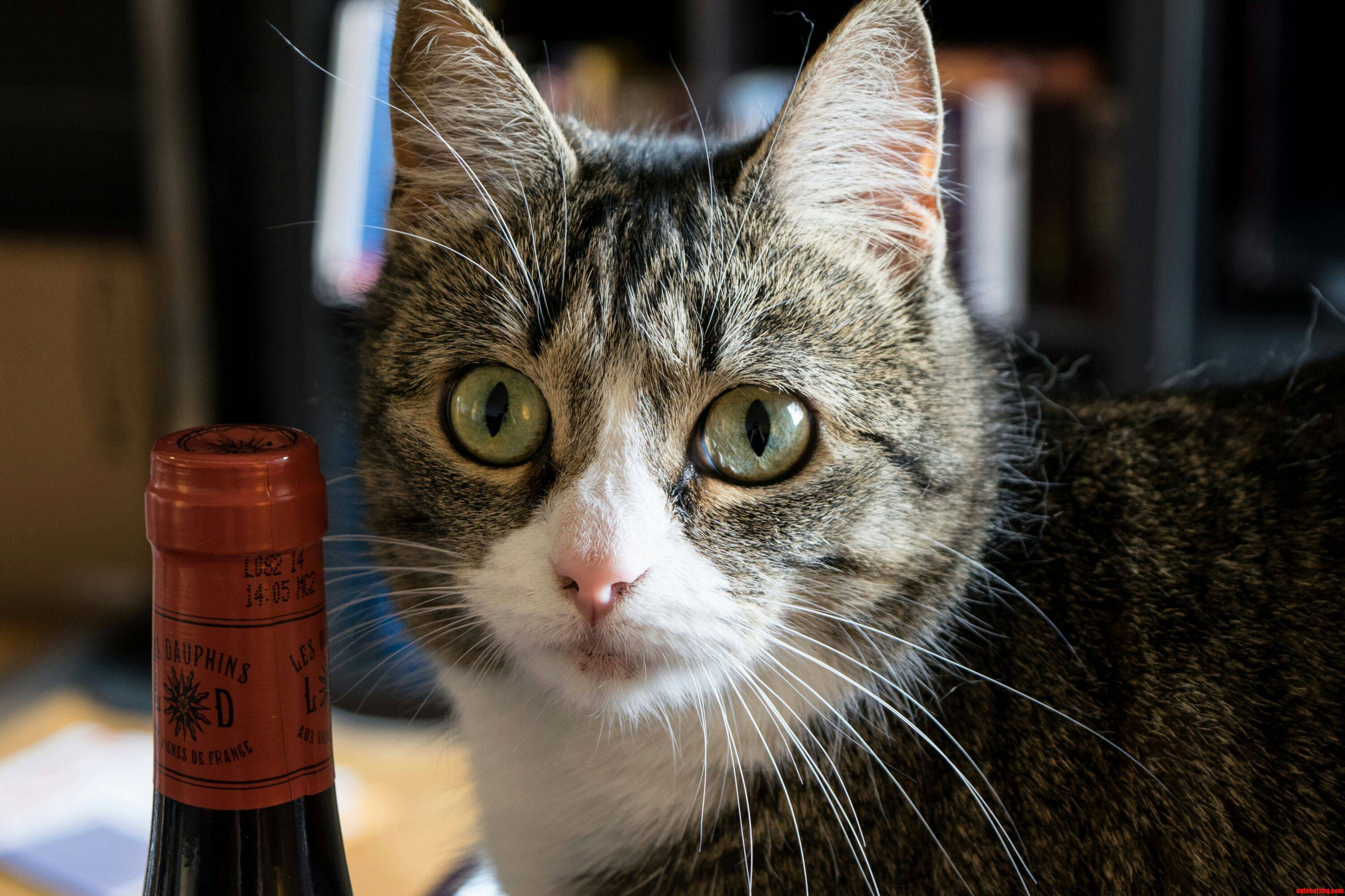 Cat Wonders If Its Time To Open The Bottle Yet