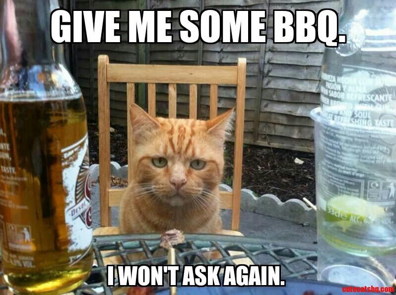 Cats At Bbqs