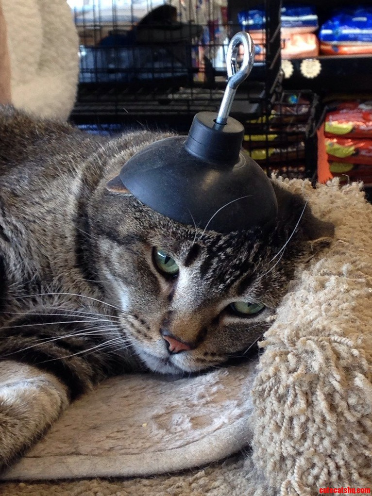 Cats Dont Like Hats.