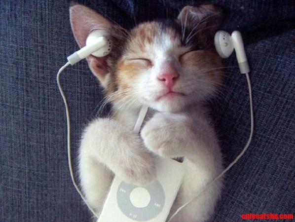 Cute Cat Listening Music