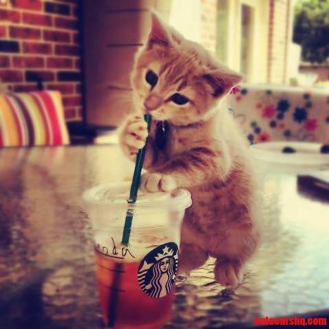 Cute Kitten Drinking Juice P