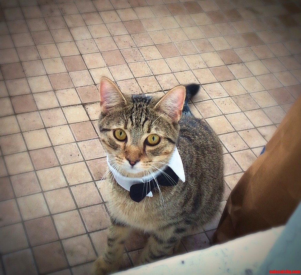 Dapper Cat.