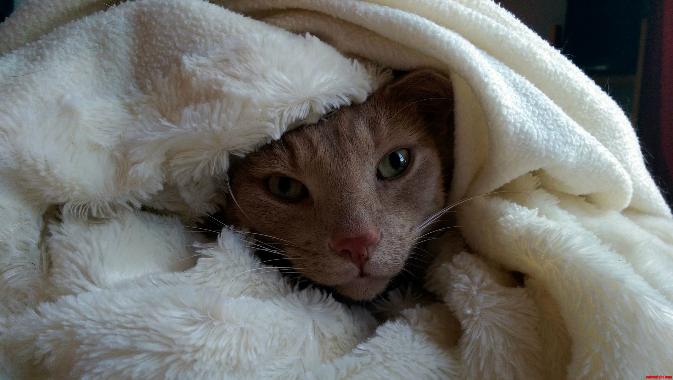 He Likes To Be Wrapped Inside A Blanket For Some Reason…