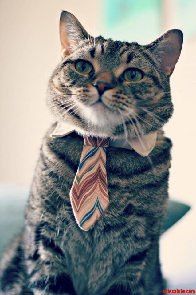 I Am Ready For The Business Today