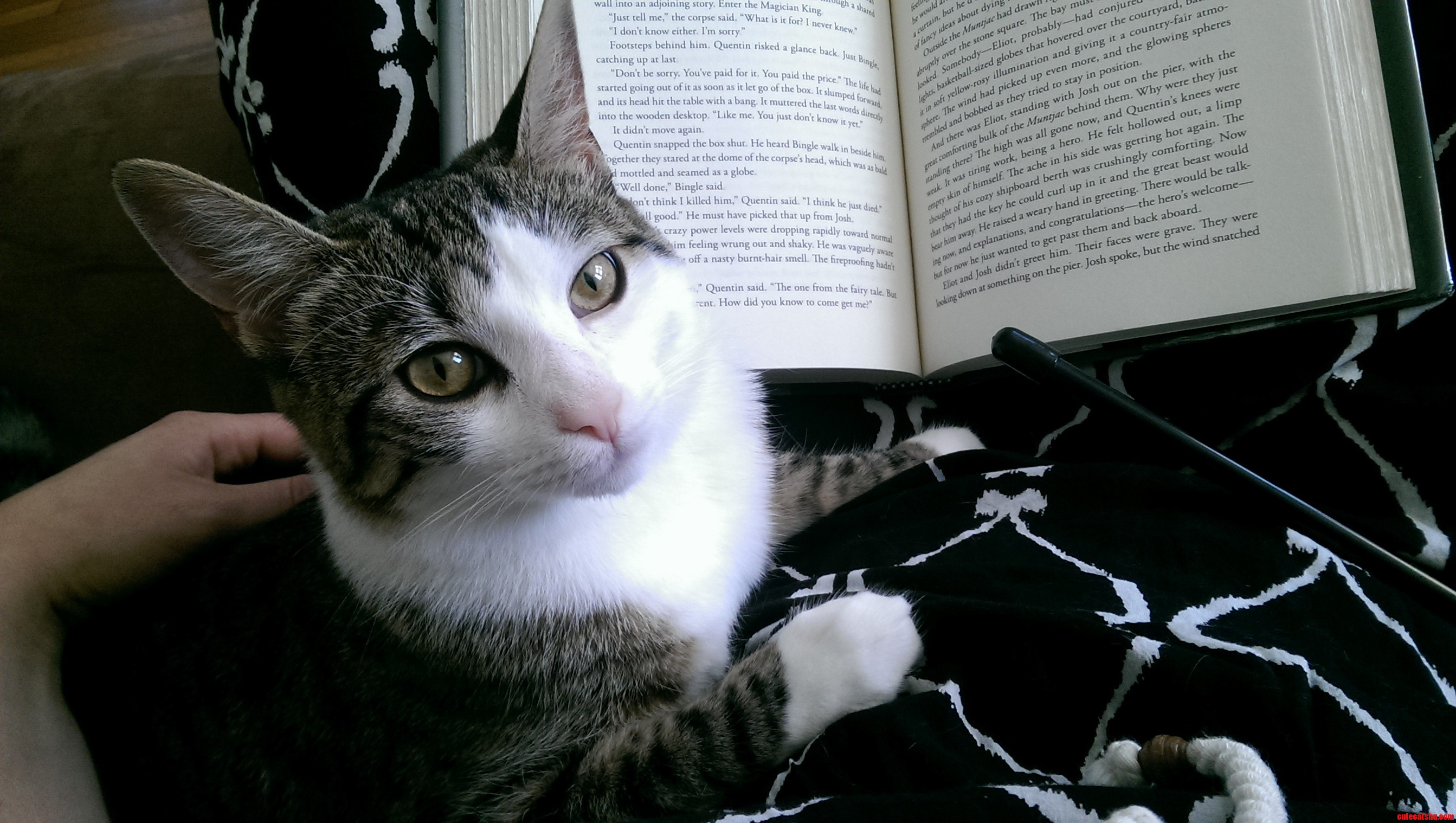 I Dont Always Read Books But When I Do I Lay On Mommys Lap.