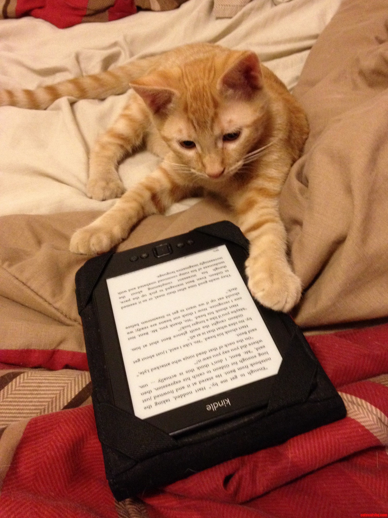 I Guess My Roommates Kitten Will Be Writing All My Book Reviews For Me From Here On Out.