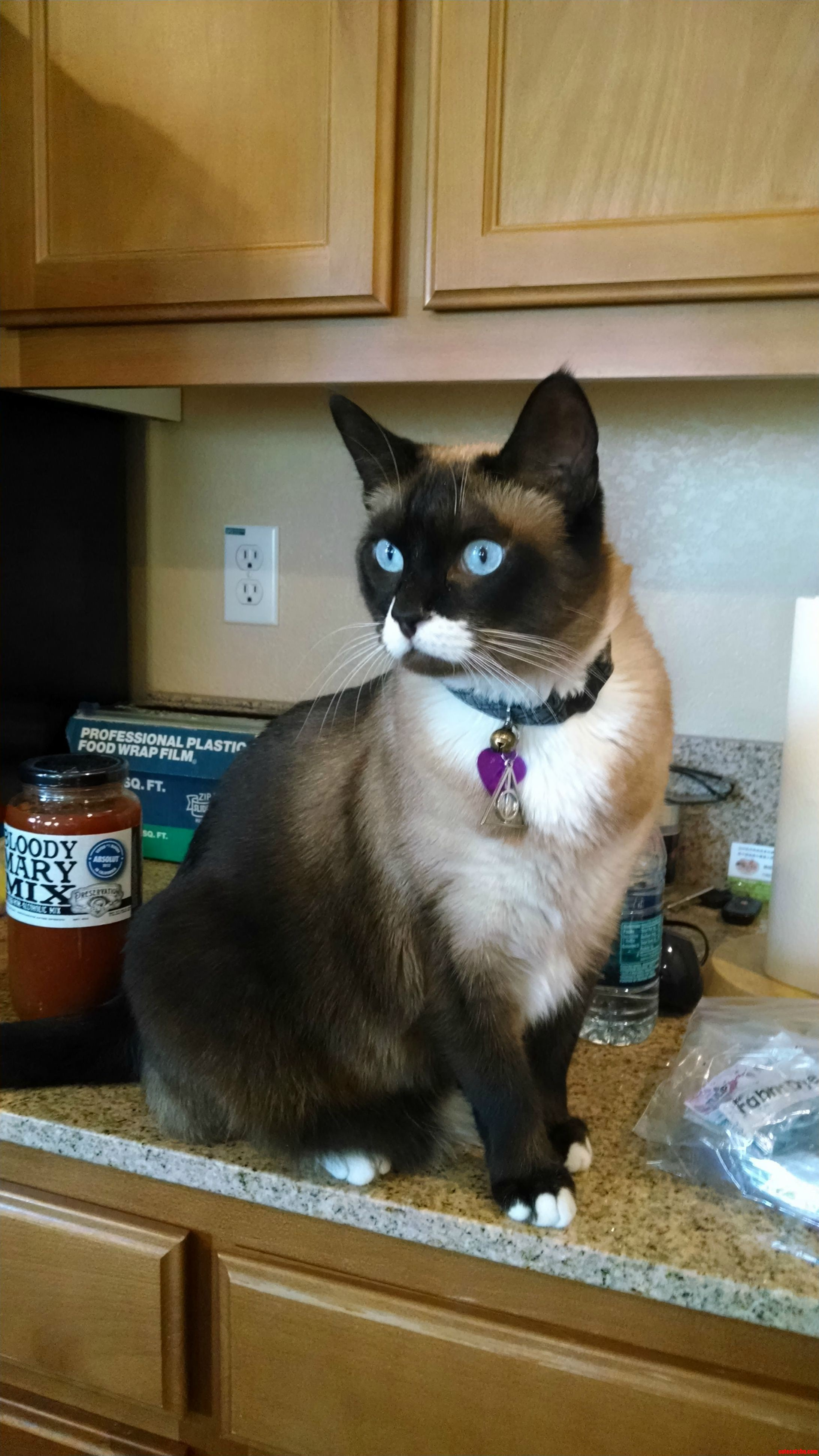 I Met This Awesomely Dapper Cat. It Has A Mustache And Named Whitaker.