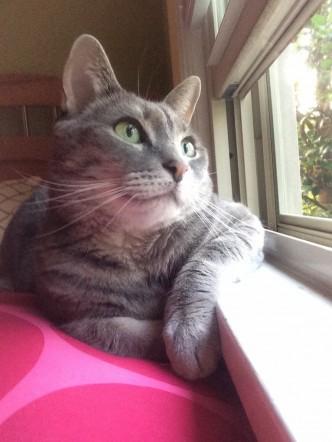 I Think My Girlfriends Cat Is Pondering Lifes Greatest Wonders