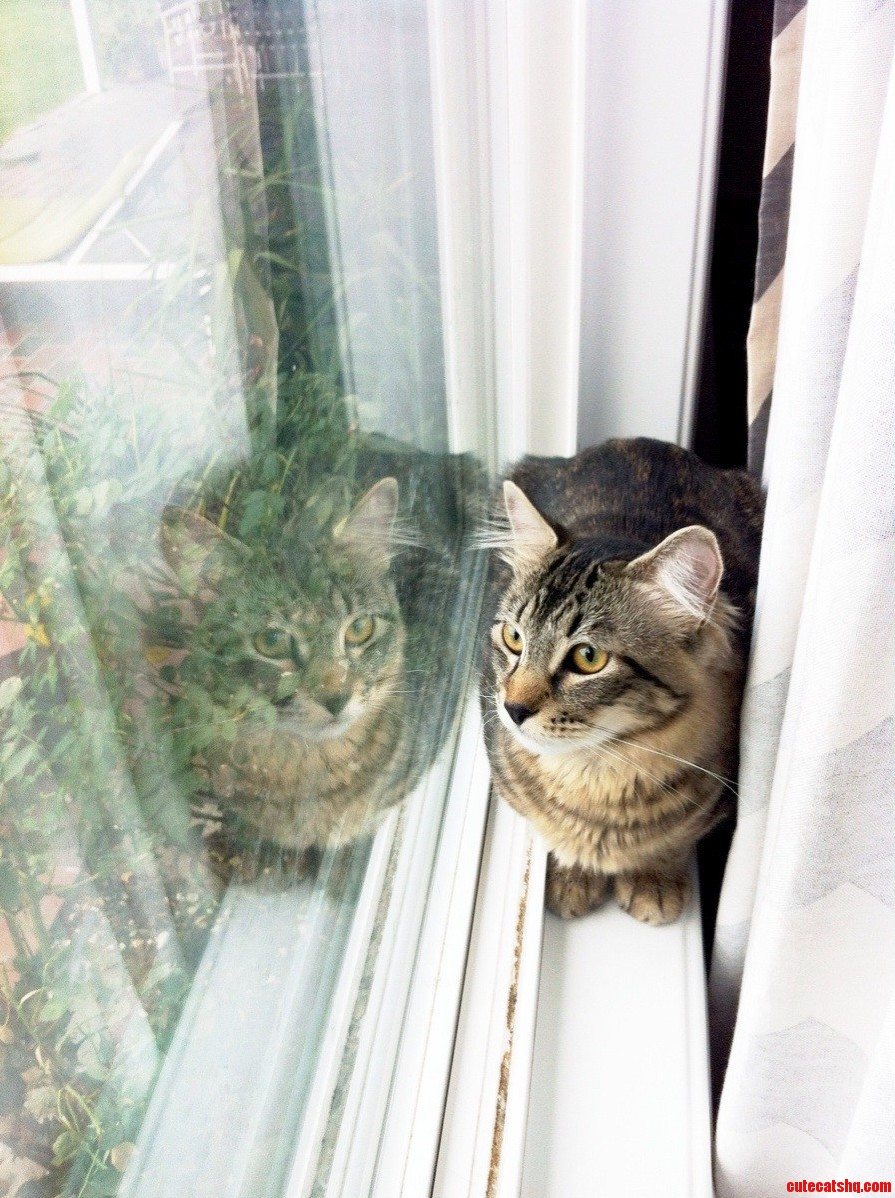 Im Just Cat Loafing Here Bird Watchin And Sunbathin