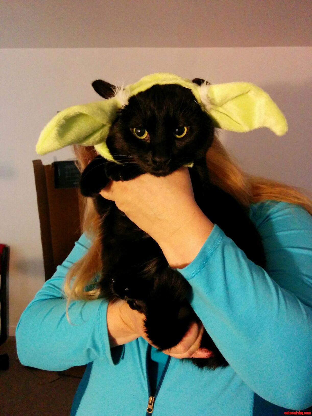 In Honor Of World Cat Day Here Is A Picture Of Sparrow In A Yoda Hat.