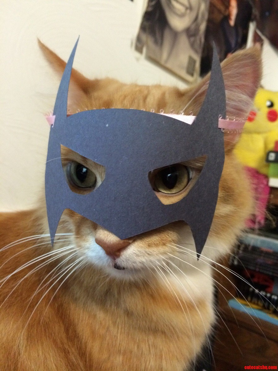 Its Batman Day.