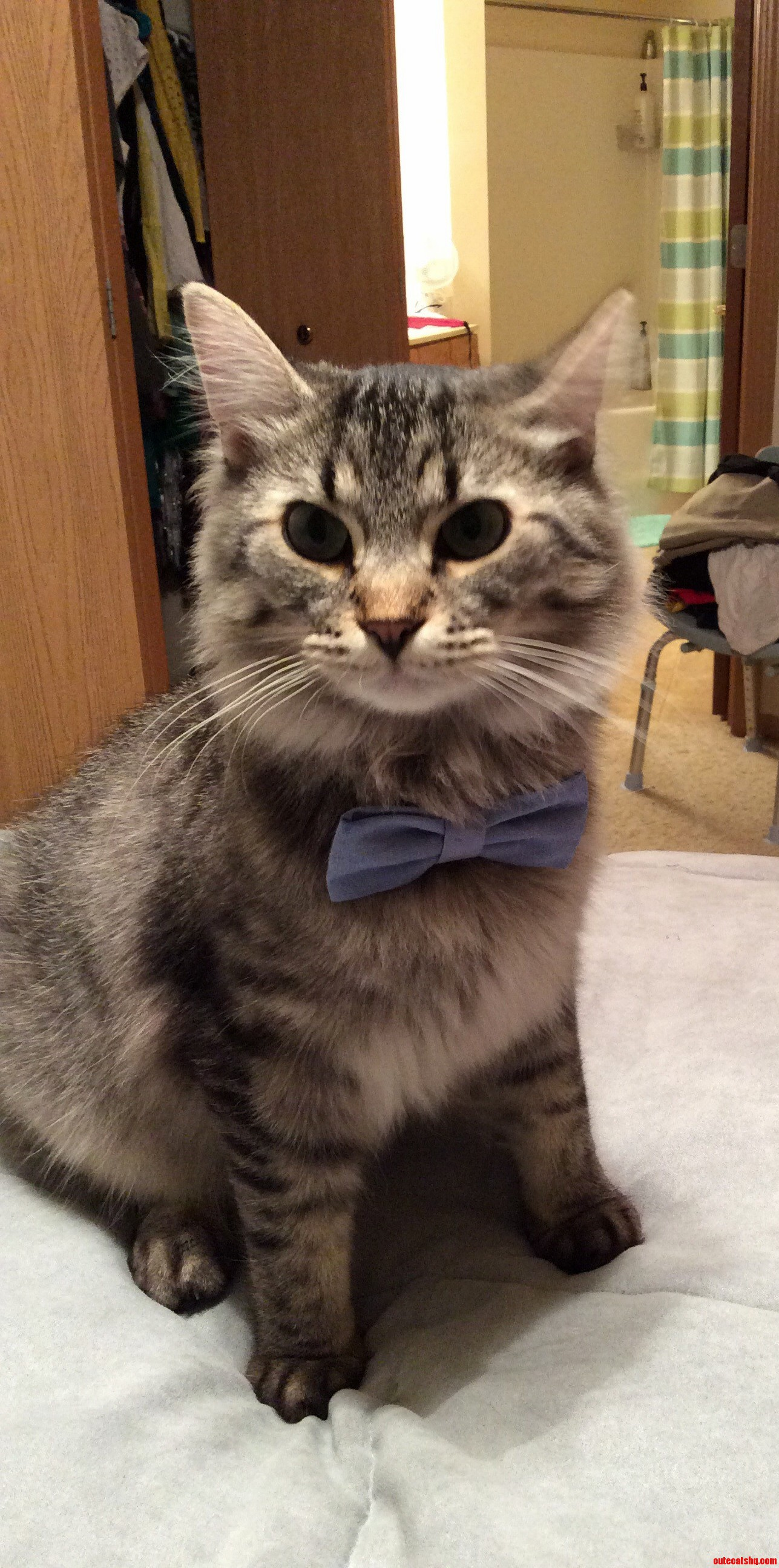 Jenko Got Dressed Up For National Cat Day.