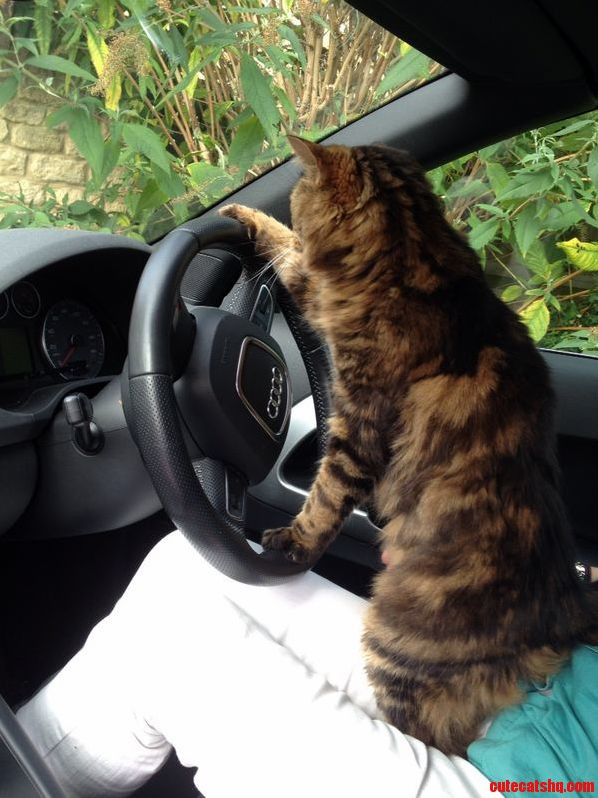 Just Going For A Drive In The Meow-Di…