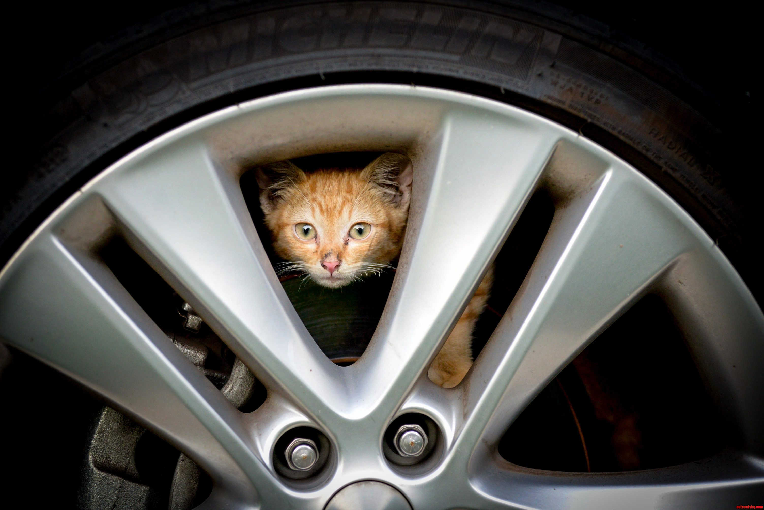 Kitty In My Car And I Want To…