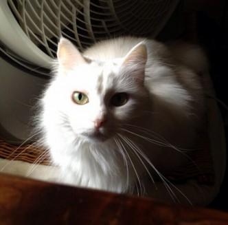 Kitty Was Feeling Photogenic Today