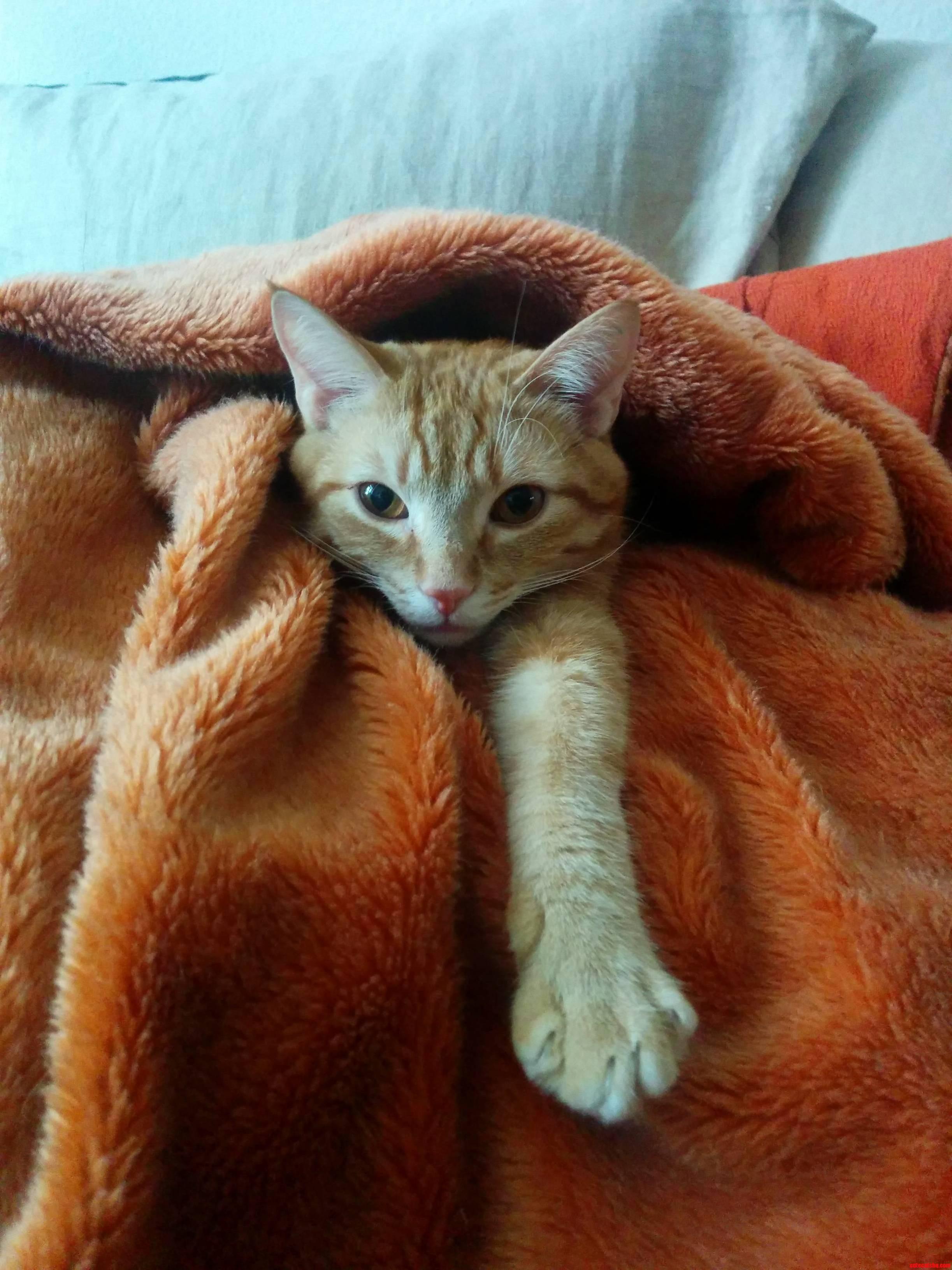 Lazy Caturday