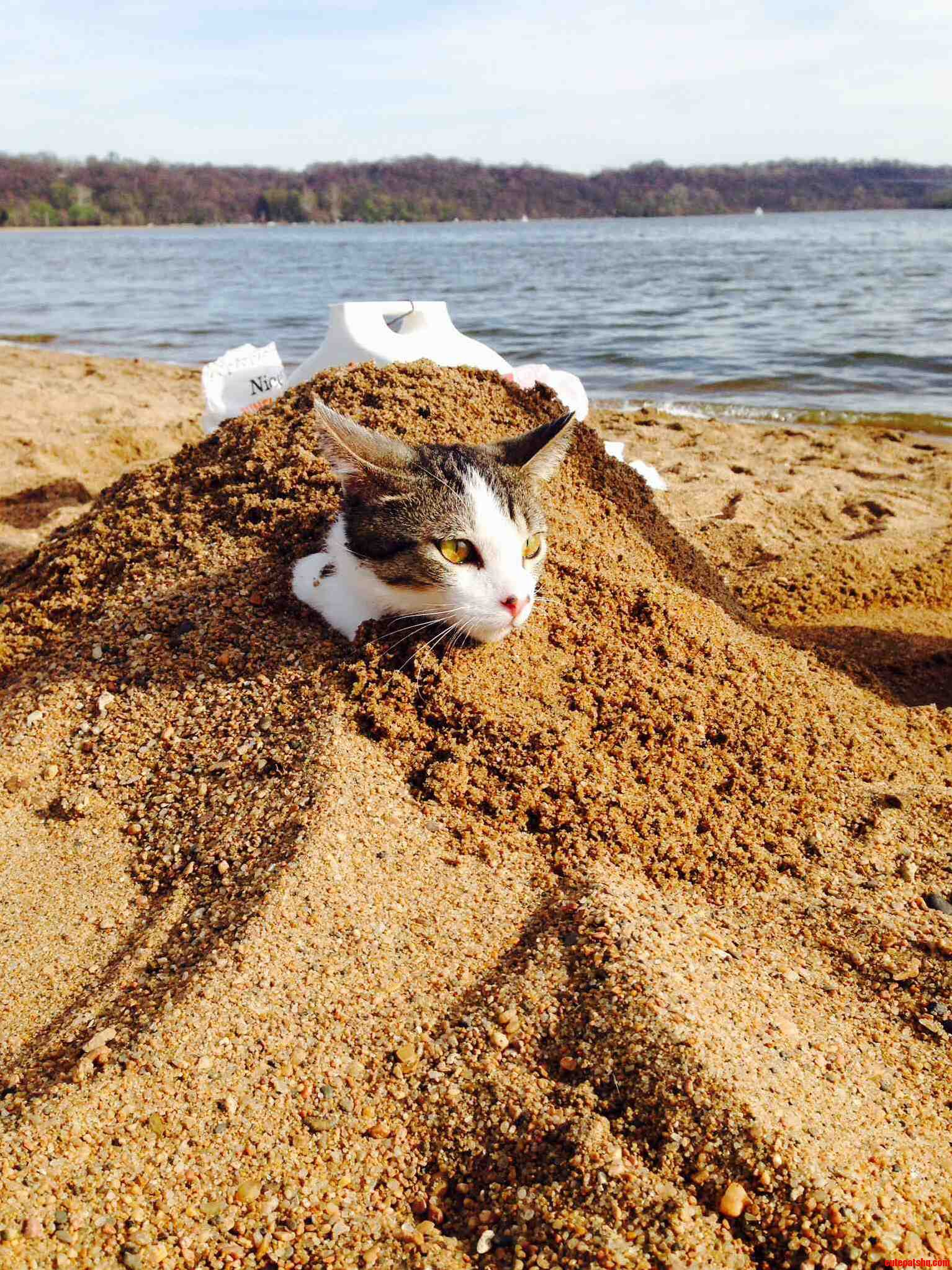 Me And My Bf Took My Cat To The Lake And Buried Him In The Bit Litter Box Lol.