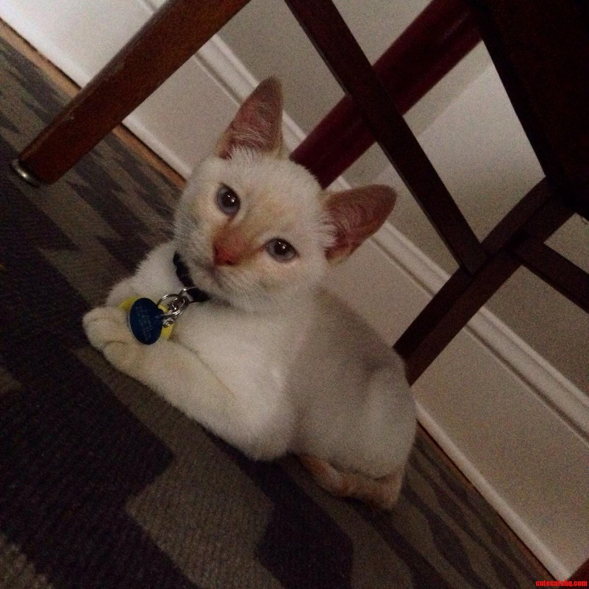 Meet Fergus