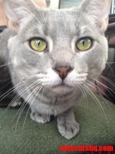 Meet Me Foster Cat Mj