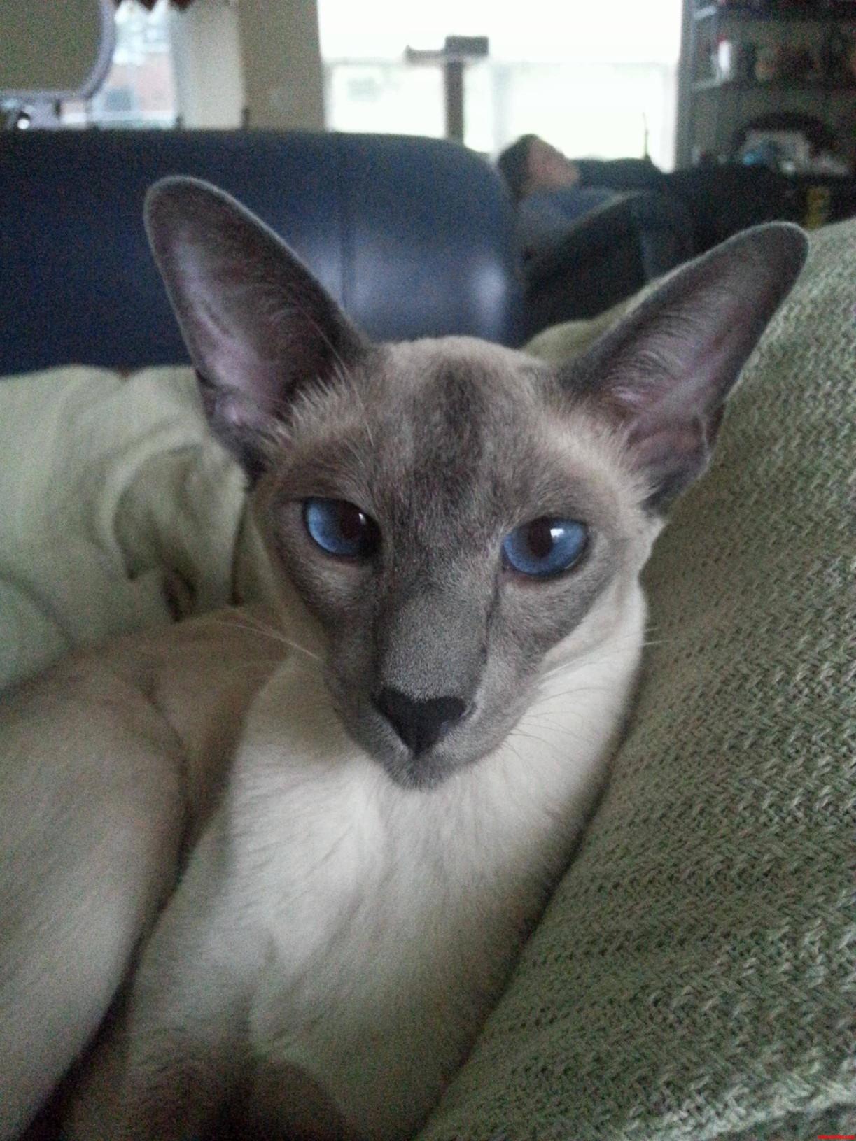 Meet Miko.
