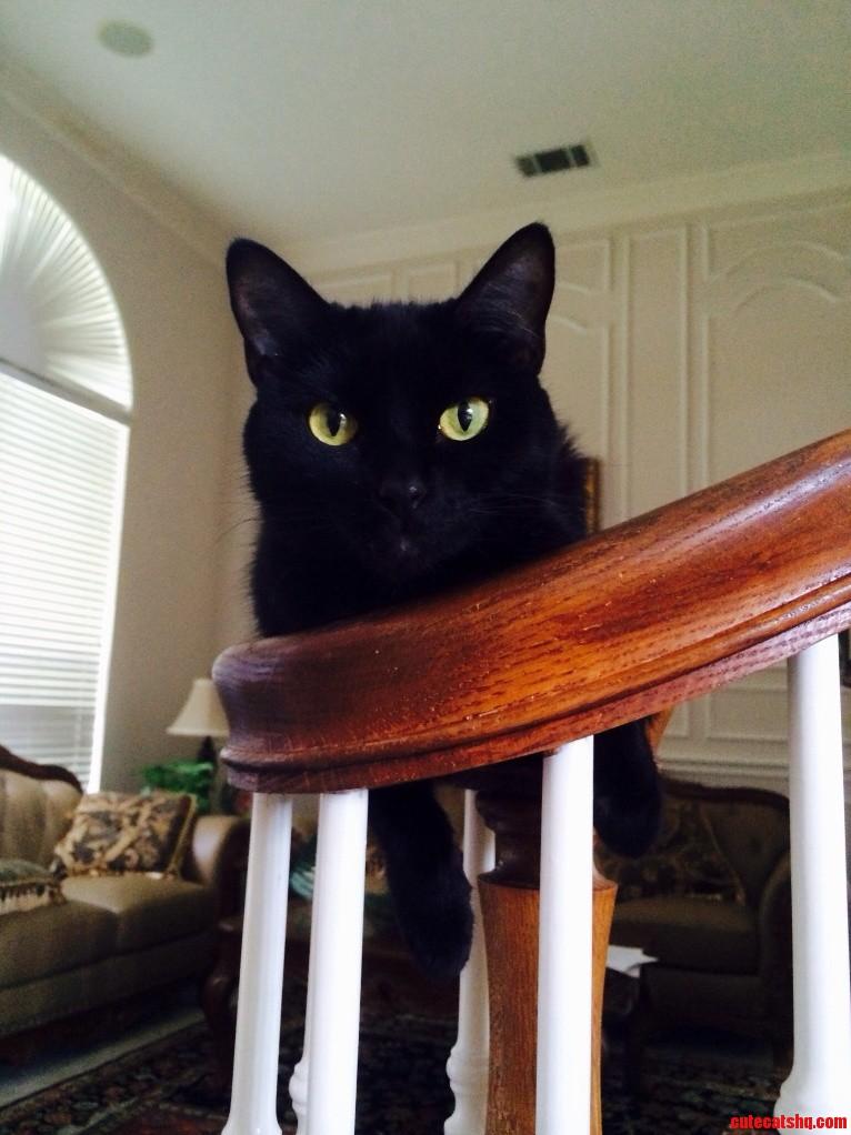 Meet My Feline Friend Salem.