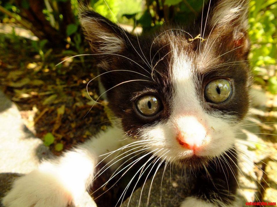 Meet Rory A Very Curious Kitten.
