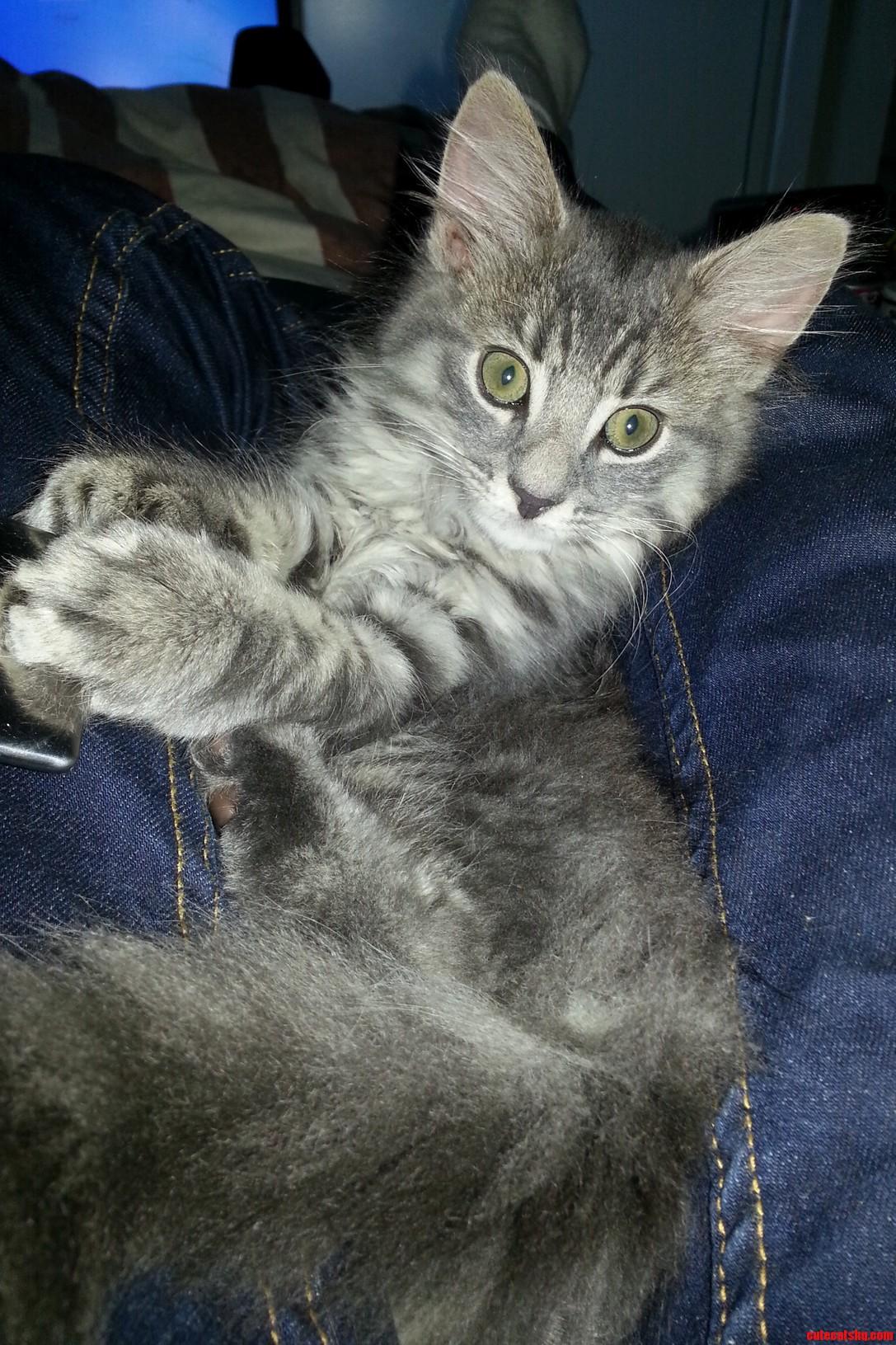 Meet Satan. My New Kitten.