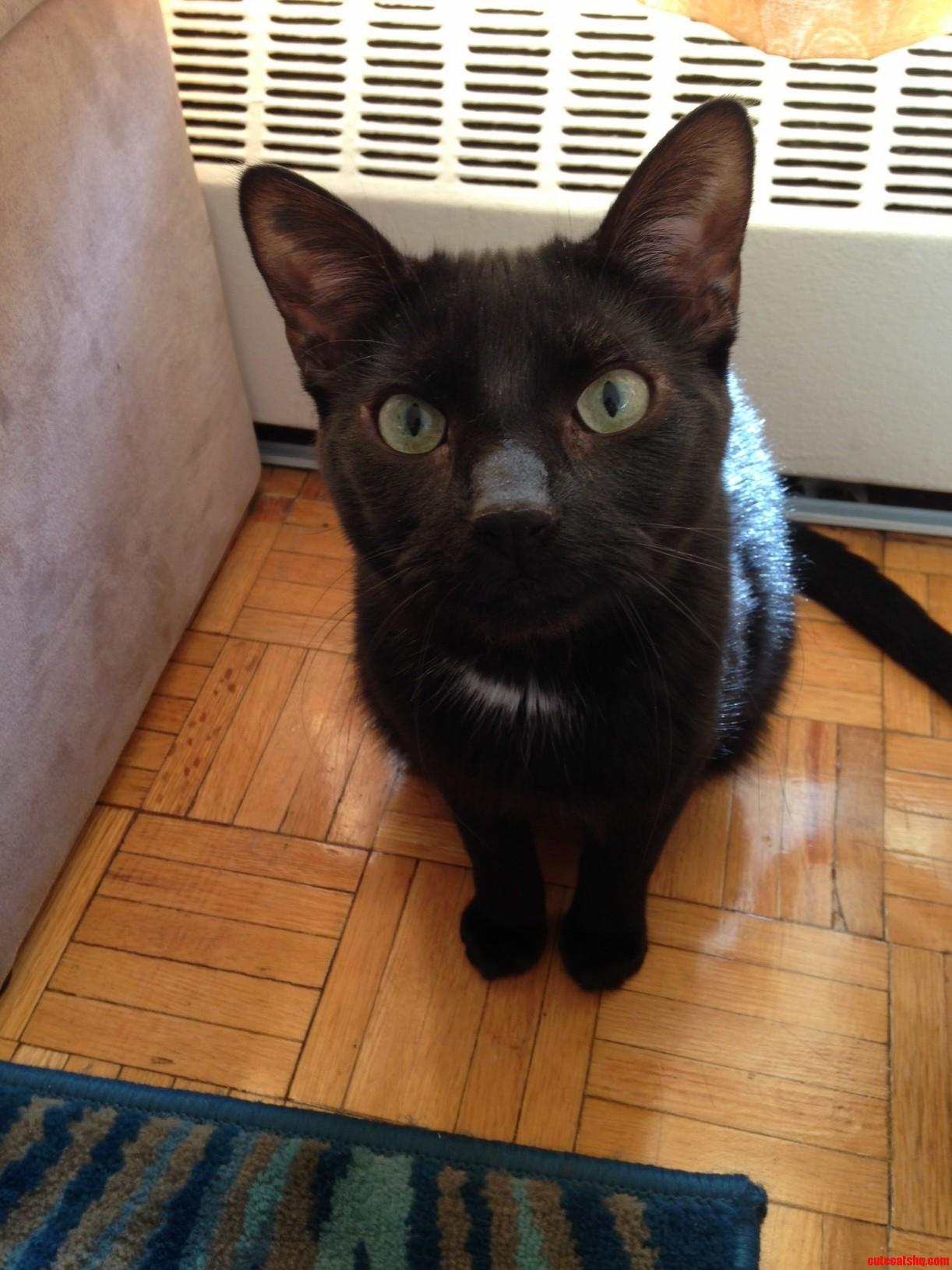 Meet Stringer. He Loves Having His Picture Taken.