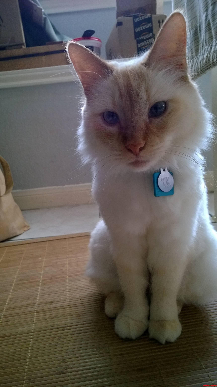 Meet The Oh-So-Slightly Cross-Eyed Kitty Love Of My Life
