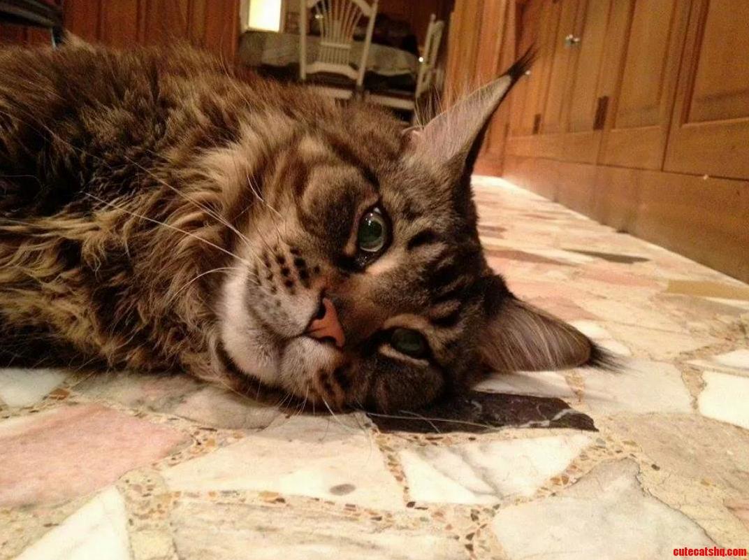 Meet Tiberias A Friends Majestic Cat.