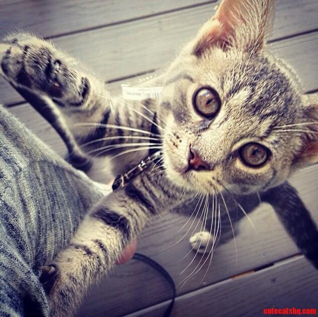 Minnie Says Happy World Cat Day.
