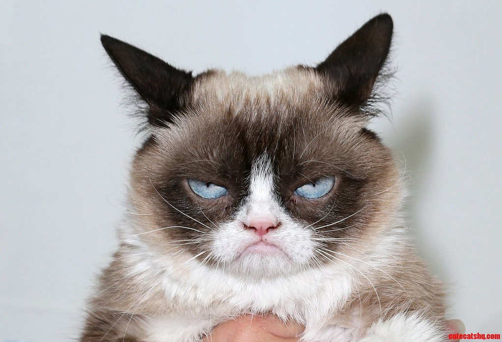 Most miserable cat ever cute cats hq pictures of cute cats and most miserable cat ever voltagebd Image collections