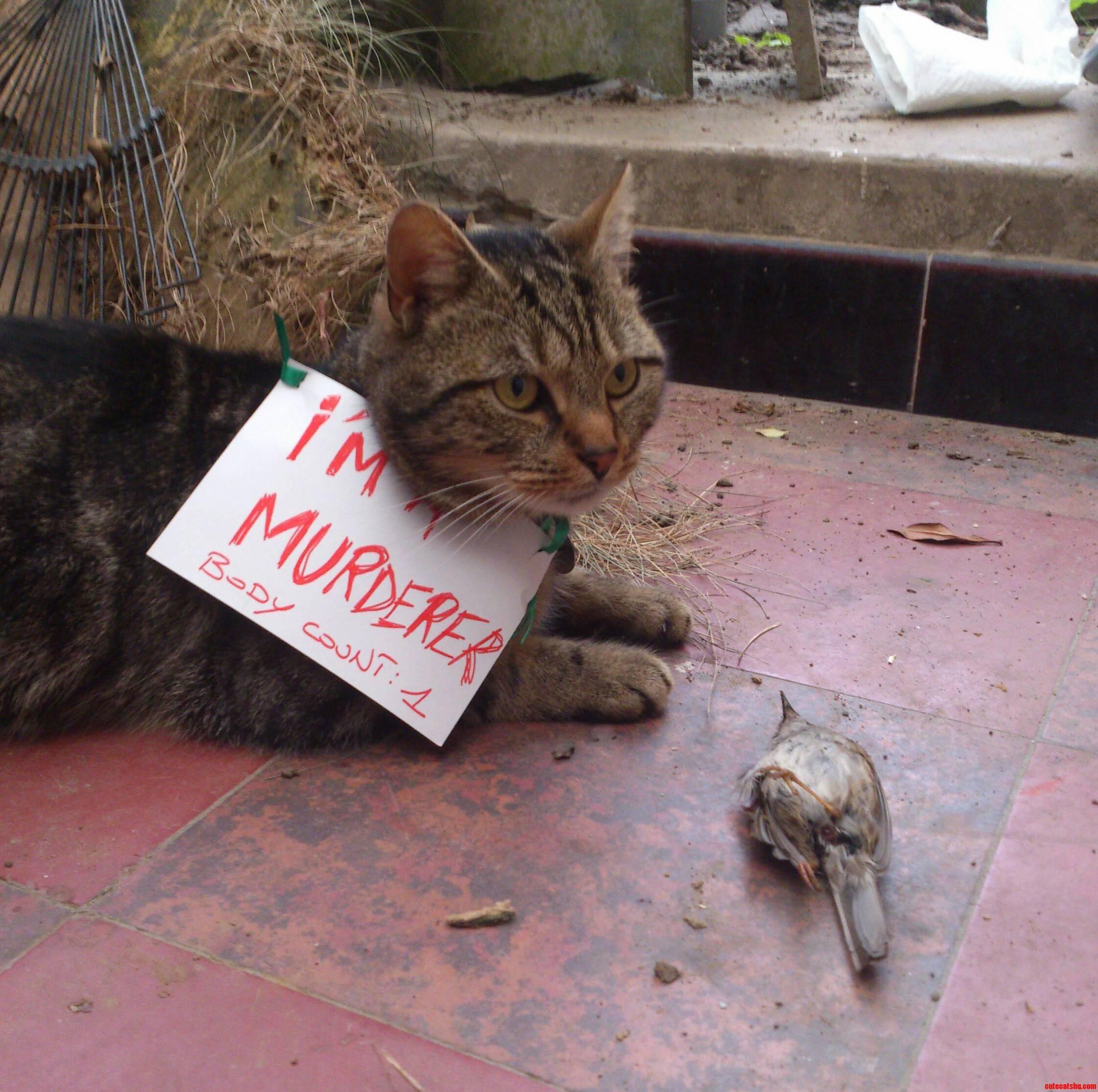 Murderer Cat