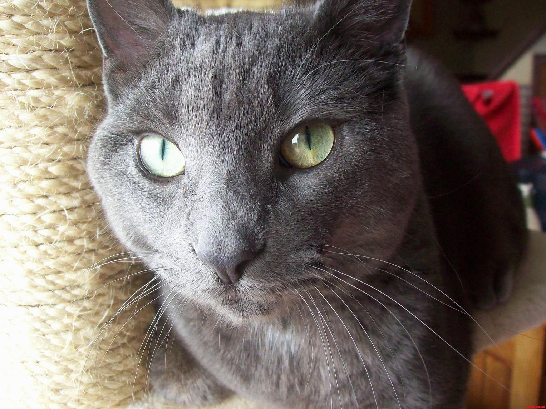 My Beautiful Boy Sully