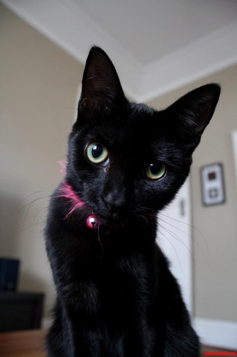 My Black Sookie.