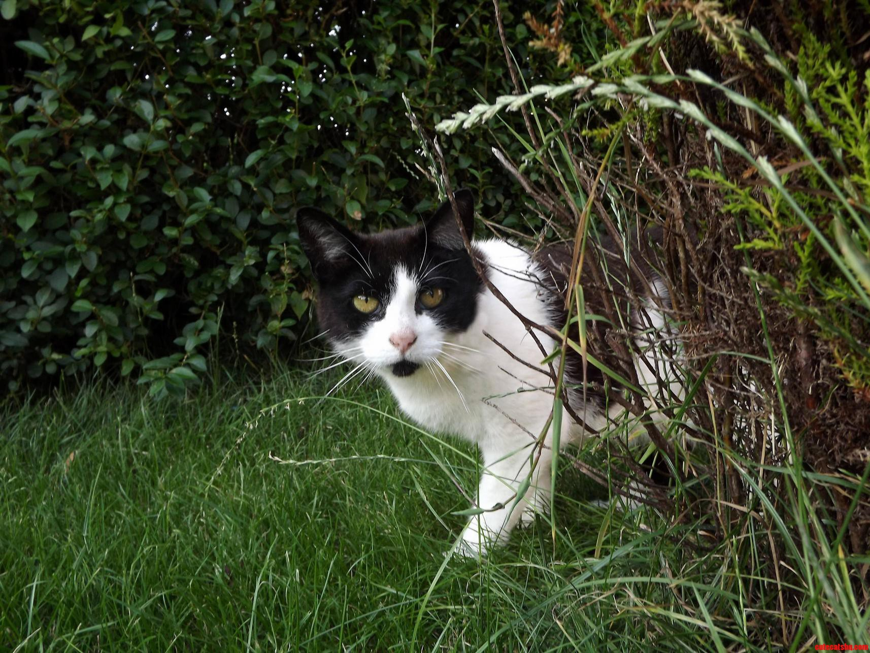 My Cat Deano In The Grass.