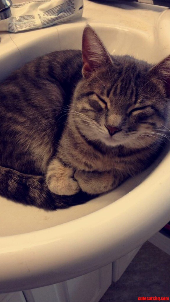 My Cat Enjoys The Sink As Well Although He Just Sleeps.