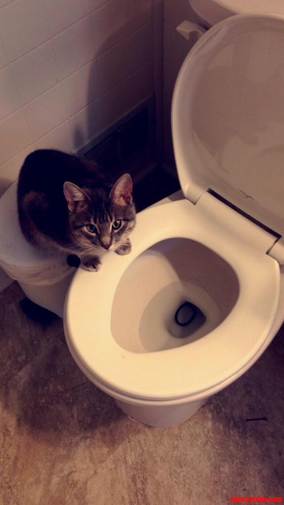 My Cat Is An Asshole.