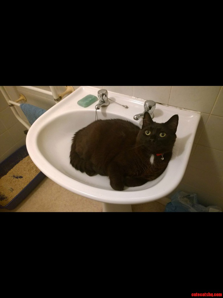 My Cat Saw All The Pictures Of Other Cats In Sinks He Wants To Join In