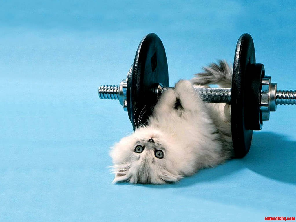 My Cats Workout