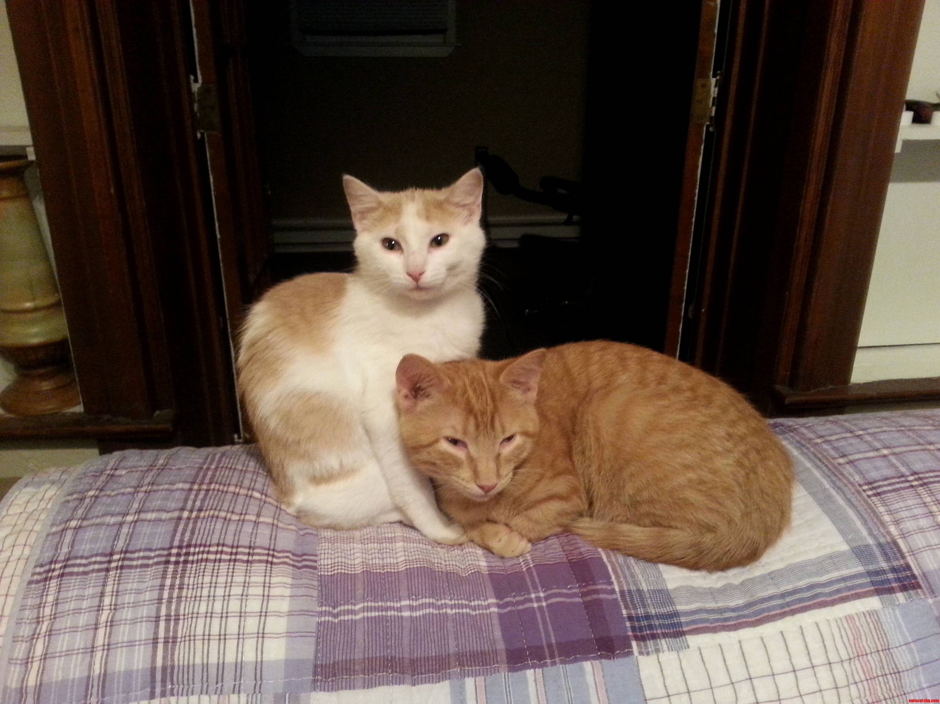 My Cats.