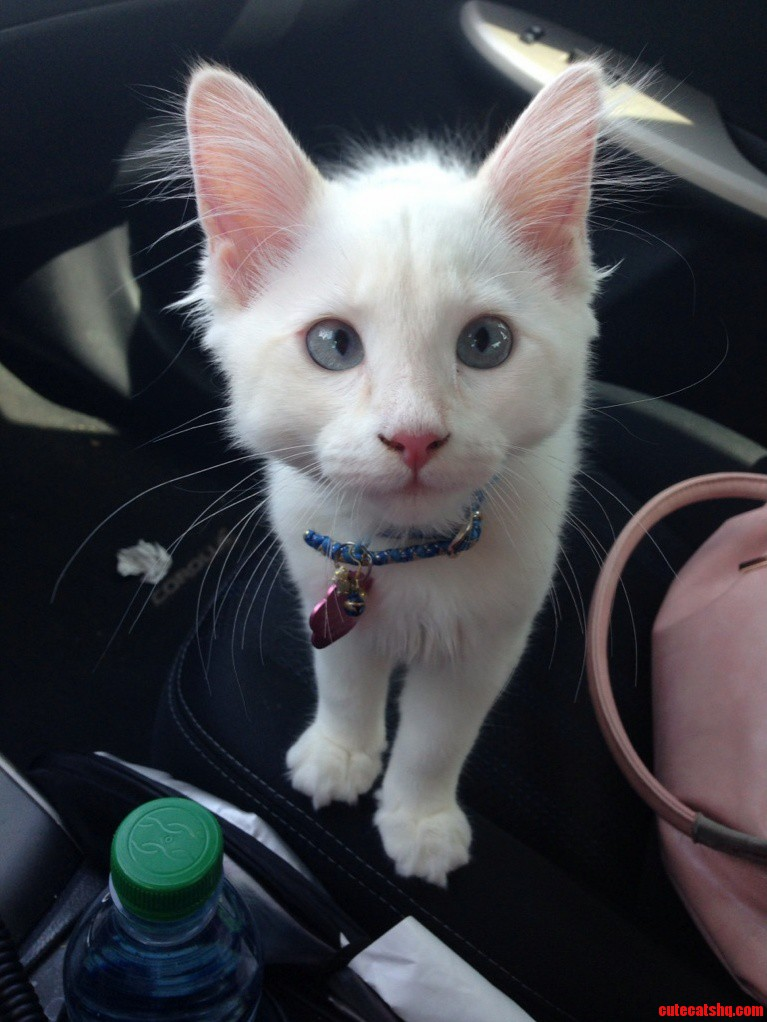 My Derpy Kitten Isis. She Loves Riding In The Car.