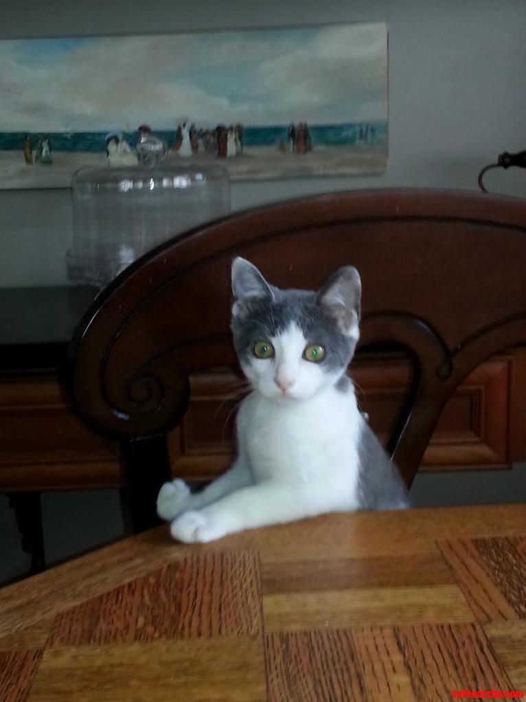 My Fiancees Kitten Dana